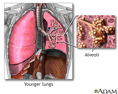 Normal lungs and alveoli